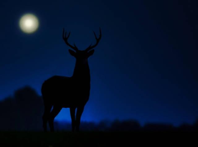 Klicken Sie auf das Bild des Tages im Fotoportal: Vollmond – © VDNGeorg May - Deutsch-Belgischer Naturpark Hohes Venn - Eifel