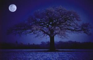 Vollmondnacht – © VDNThomas Ebelt - Lauenburgische Seen