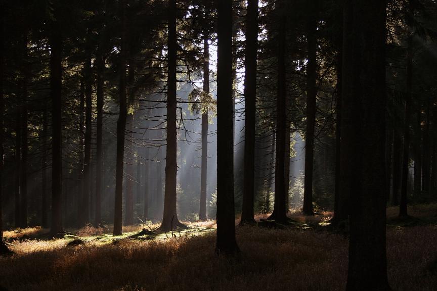 Wald bei Oberhof – © VDNHans-Jürgen Ste – Thüringer Wald