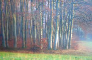 Klicken Sie auf das Bild des Tages im Fotoportal: Waldeck – © VDNJörg Willems - Rothaargebirge