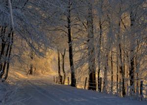 Klicken Sie auf das Bild des Tages im Fotoportal: Wandern durch den Märchenwald – © VDNFUHO - Hessische Rhön