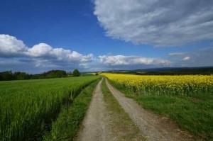 Klicken Sie auf das Bild des Tages im Fotoportal: Wanderweg – © VDNHans-Jürgen Schmidt - Nördlicher Oberpfälzer Wald