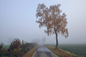 Klicken Sie auf das Bild des Tages im Fotoportal: Wanderweg – © VDNHellwig - Lauenburgische Seen