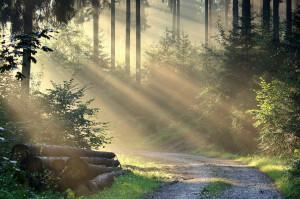 Klicken Sie auf das Bild des Tages im Fotoportal: Weg – © VDNJörg Willems - Rothaargebirge