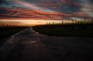 Klicken Sie auf das Bild des Tages im Fotoportal: Weg aus der Nacht – © VDNp.ponte - Soonwald-Nahe