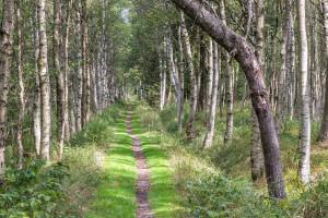 Klicken Sie auf das Bild des Tages im Fotoportal: Weg durchs Hochmoor – © VDNAxel Küster - Erzgebirge  Vogtland