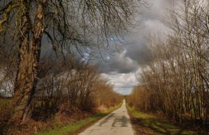 Klicken Sie auf das Bild des Tages im Fotoportal: Weg frei – © VDNblum - Lauenburgische Seen
