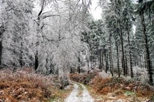 Klicken Sie auf das Bild des Tages im Fotoportal: Weg in den Winter – © VDNWerner Schuster - Steinwald