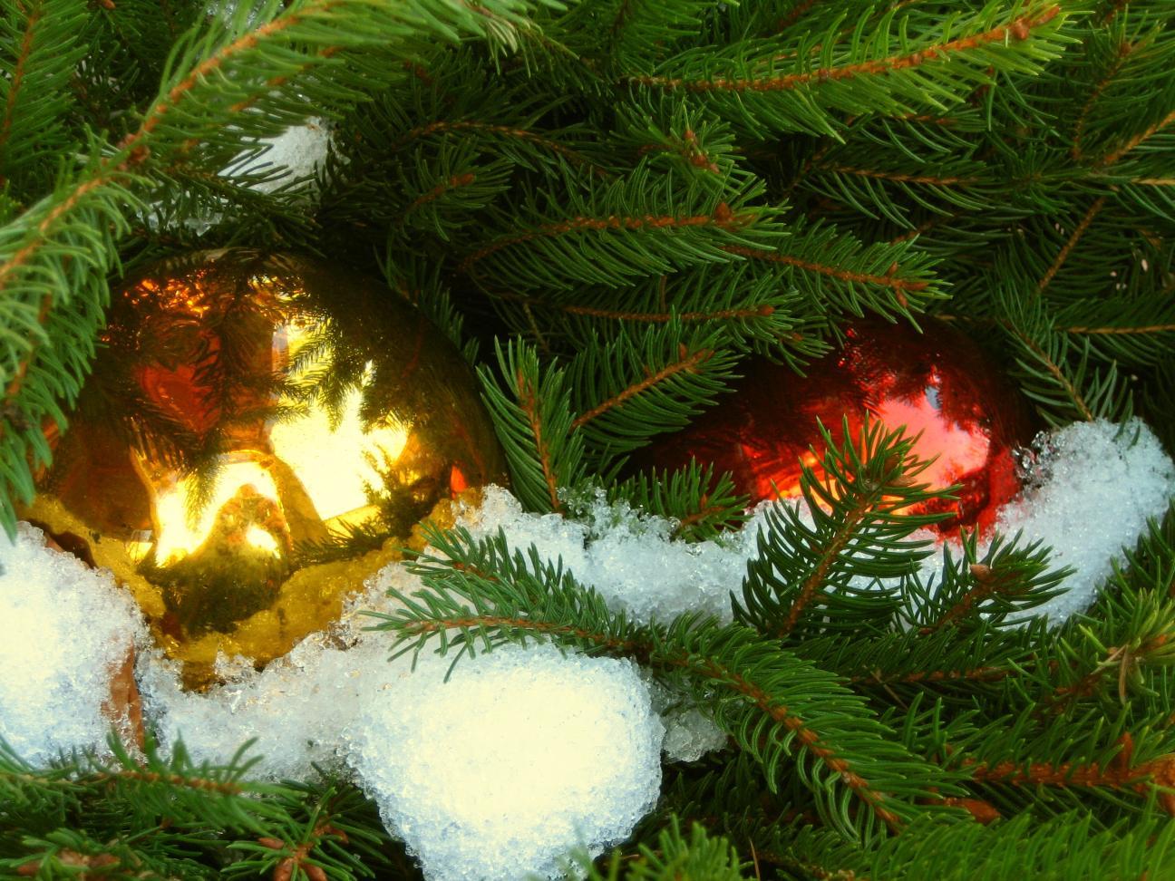 Weihnachtsfarben – © VDNSabine Kotz – Bayerischer Wald