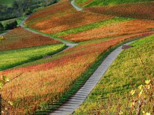 Klicken Sie auf das Bild des Tages im Fotoportal: Weinbergsleuchten – © VDNClara Spielmann - Stromberg-Heuchelberg