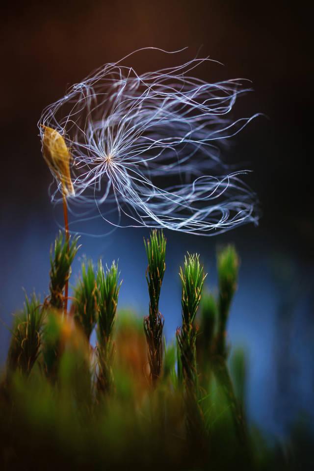 Klicken Sie auf das Bild des Tages im Fotoportal: Windspiel im Moor – © VDNIke Noack - Nuthe-Nieplitz