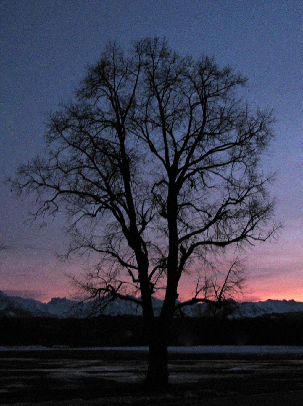 Winterbaum (HF) – © VDNSaskia31 - Nagelfluhkette