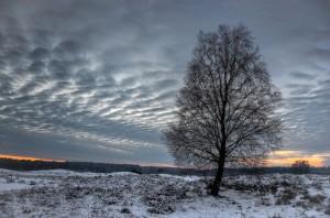 Winterbirke_ VDNh.Schier_ Wildeshauser Geest