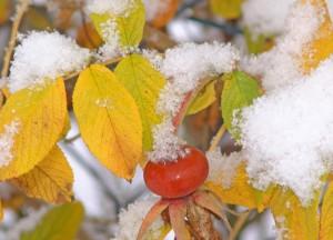 Wintereinbruch – ©VDNWalter J. Pilsak - Steinwald