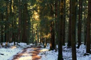 Klicken Sie auf das Bild des Tages im Fotoportal: Winterliche Waldwonne – © VDNChristine R. Sigl - Bayerischer Wald
