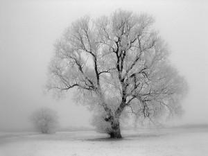 Klicken Sie auf das Bild des Tages im Fotoportal: Winterliche Weide_ VDNUwe Liebe_ Bergstraße-Odenwald
