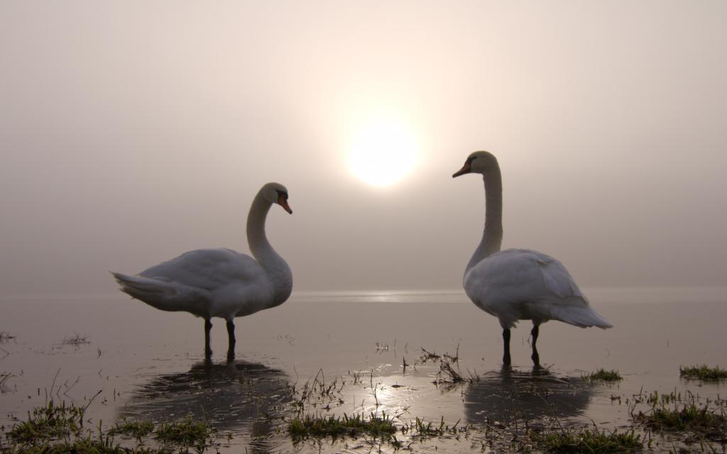 Klicken Sie auf das Bild des Tages im Fotoportal: Winterlicht – © VDNAngelika Hecht - Obere Donau