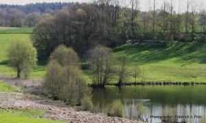 Zartes grün (c) VDN - Friedrich J. Flint - Lauenburgische Seen