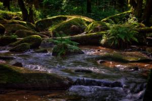 Klicken Sie auf das Bild des Tages im Fotoportal: Zauberhaftes Lerautal – © VDNHans-Jürgen Schmidt - Nördlicher Oberpfälzer Wald
