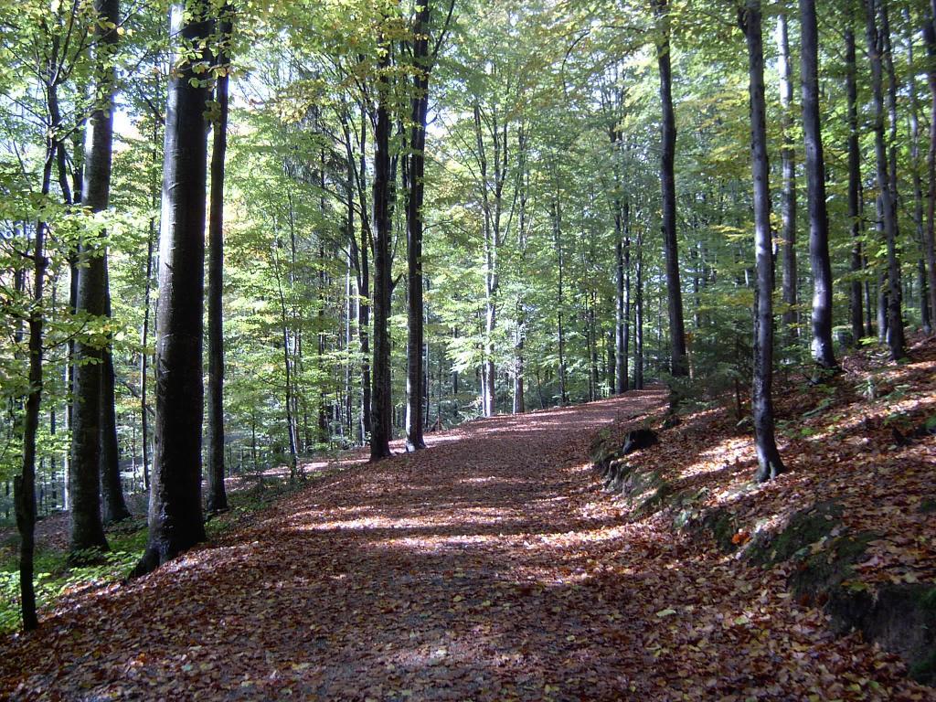 Zauberwald – © VDNRenate – Bayerischer Wald