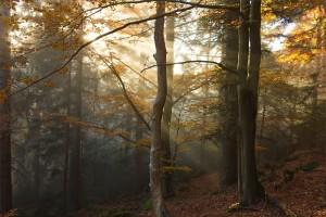 buchenstrahlen - (c) VDN - Christine L / Bayerischer Wald