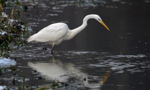 Klicken Sie auf das Bild des Tages im Fotoportal: der jäger.... – © VDNblum - Lauenburgische Seen