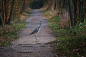 Klicken Sie auf das Bild des Tages im Fotoportal: einsame Wege – © VDNRoland Heinrichs - Schwalm-Nette