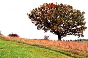 einsamer Baum – © VDNJorge – Deutsch-Belgischer Naturpark Hohes Venn - Eifel