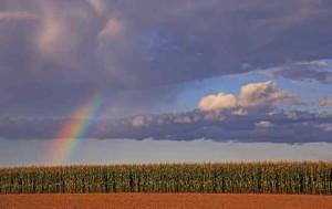 Klicken Sie auf das Bild des Tages im Fotoportal: farbiger  Abend – © VDNwerner voss - Elbhöhen-Wendland
