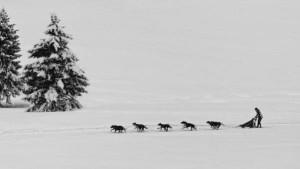 Klicken Sie auf das Bild des Tages im Fotoportal: in der Spur – © VDNFranz Vozeler-Pape - Südschwarzwald