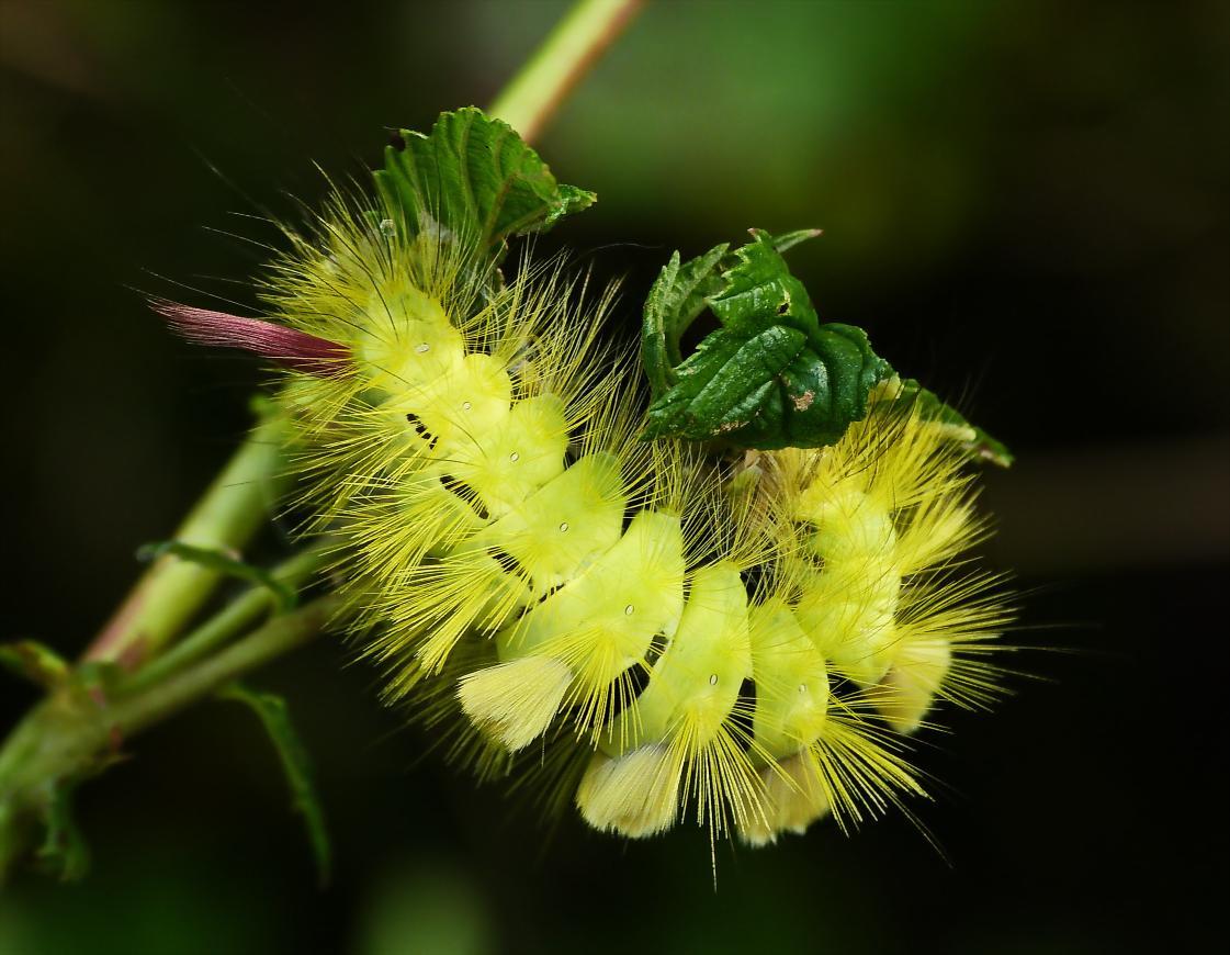 leuchtende Pinsel – © VDNbaude - Deutsch-Belgischer Naturpark Hohes Venn - Eifel