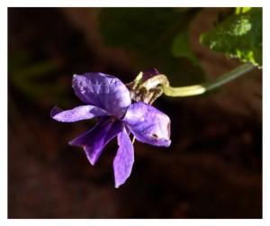 Klicken Sie auf das Bild des Tages im Fotoportal: schon Vorfrühling  – © VDNbaude – Deutsch-Belgischer Naturpark Hohes Venn - Eifel