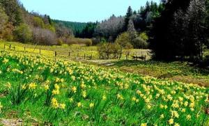 soweit das Auge reicht – (c)VDNbaude - Deutsch-Belgischer Naturpark Hohes Venn - Eifel