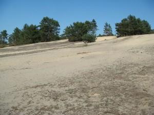 Sand, Sand, Sand... (Foto: Naturpark Dahme-Heideseen)
