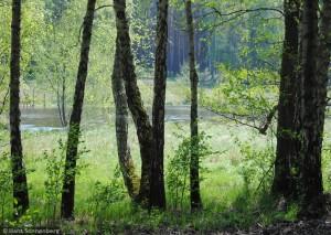 Dahme 300x213 Erinnerung: Foto Wettbewerb für das JahreBuch 2022 – Mein Lieblingsplatz im Naturpark Dahme Heideseen