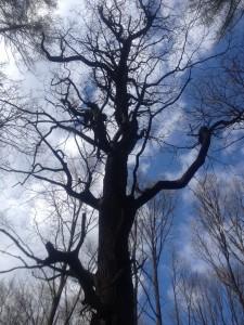 Dubroweiche heidler Waldwispern – wenn Bäume sprechen