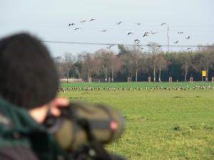Gänsebeobachtung mit Spektiv; Foto Naturwacht - Kopie