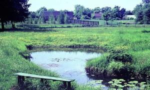 Garten in Pätz - Walter Kirsche