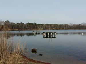 Halbe See 300x225 Tauchen für den Naturschutz