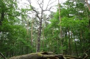 Naturschutzgebiet Katzenberge (© BFB HOS)