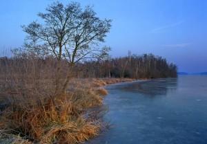 Moor am Pätzer Hintersee (Wolfgang Klaeber)