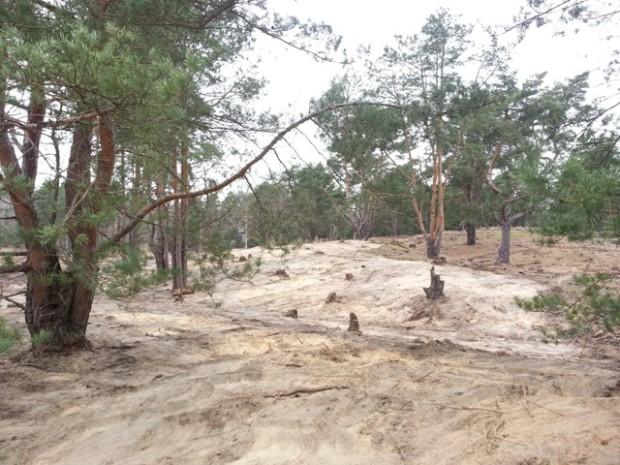 Plaggen Duene web 620x465 Auf der Binnendüne wird der Sand freigelegt