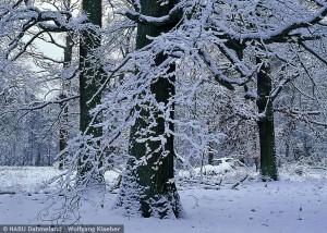 Winterlandschaft im NSG Katzenberge (© Wolfgang Klaeber)