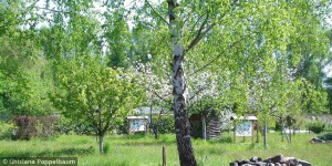 Frühling im Biogarten (Foto: G. Poppelbaum)
