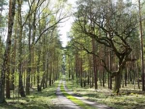 csm npdh dubrow  eiche am weg hause ba5215e59a 300x225 Frühlingshafte Wandertipps für den Naturpark Dahme Heideseen