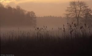 Dahme im Frühlings-Morgennebel (Foto: Hans Sonnenberg)