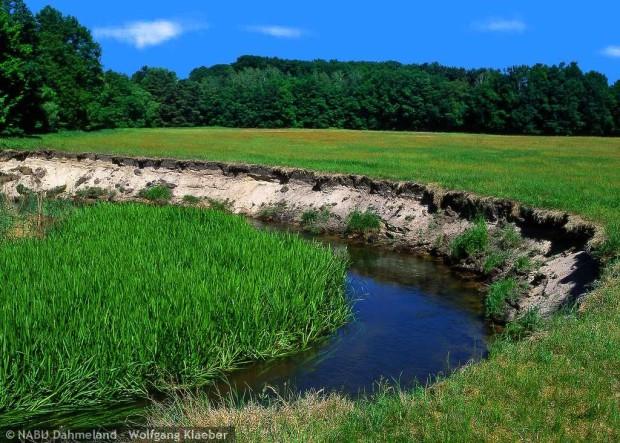 dahmemäander 620x443 Ranger Erlebnis Tour Die Alte Dahme   ein lebendiger Fluss