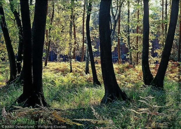 erlen dahme 620x443 Life Projekt Feuchtwälder startet auch im Naturpark Dahme Heideseen