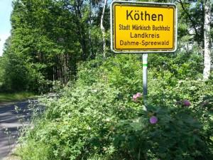 Wildrosen umsäumen das Ortseingangsschild von Köthen