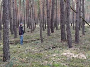 Ehemaliger Wölbacker in einem Kiefernwald bei Münchehofe (Foto: Sonnenberg)
